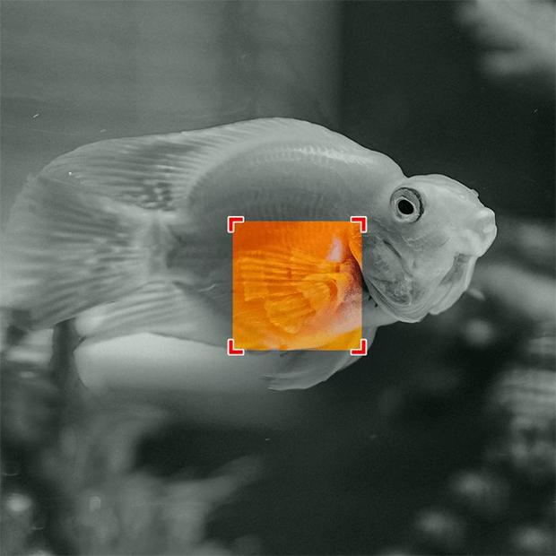 آج آپ کی نظر کا امتحان ہے، ان جانوروں کی تصاویر میں چھپی ہوئی چیزیں تلاش کر کے دکھائیں -- جوابات 4