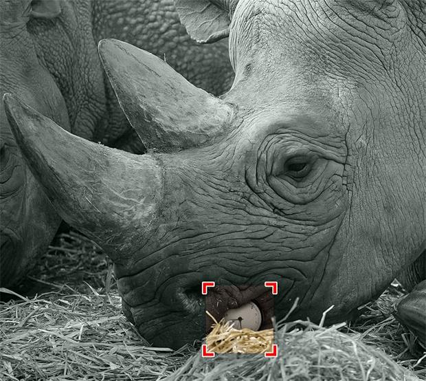 آج آپ کی نظر کا امتحان ہے، ان جانوروں کی تصاویر میں چھپی ہوئی چیزیں تلاش کر کے دکھائیں -- جوابات 9