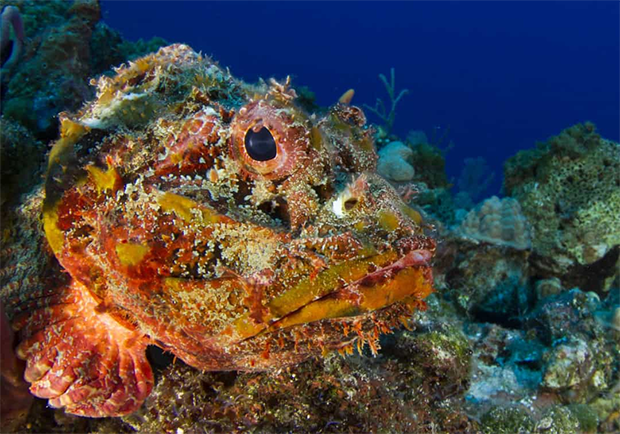اس کے سامنے تو کوبرا سانپ بھی کچھ نہیں-- دنیا کے سب سے خطرناک سمندری جانور جن کے بارے میں جان کر آپ پانی میں پاؤں بھی نہیں رکھیں گے 4