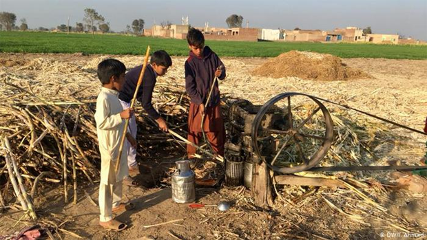 پاکستان میں دیہات کی سادہ مگر پرلطف زندگی جس کی خواہش ہر کسی کو٬ چند دلچسپ جھلکیاں 10