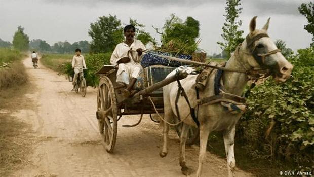 پاکستان میں دیہات کی سادہ مگر پرلطف زندگی جس کی خواہش ہر کسی کو٬ چند دلچسپ جھلکیاں 18