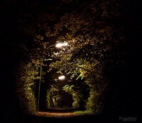 Nachts im Park