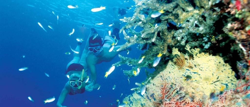 Scuba Diving Amp Snorkeling At Whitsundays Hamilton Island