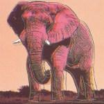 African Elephant, [II.293], 1983