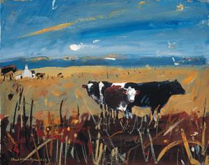 Cattle, Arisaig