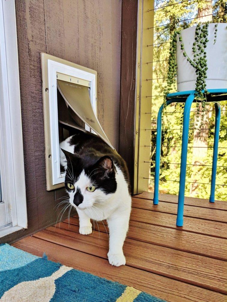 New cat door for catio space