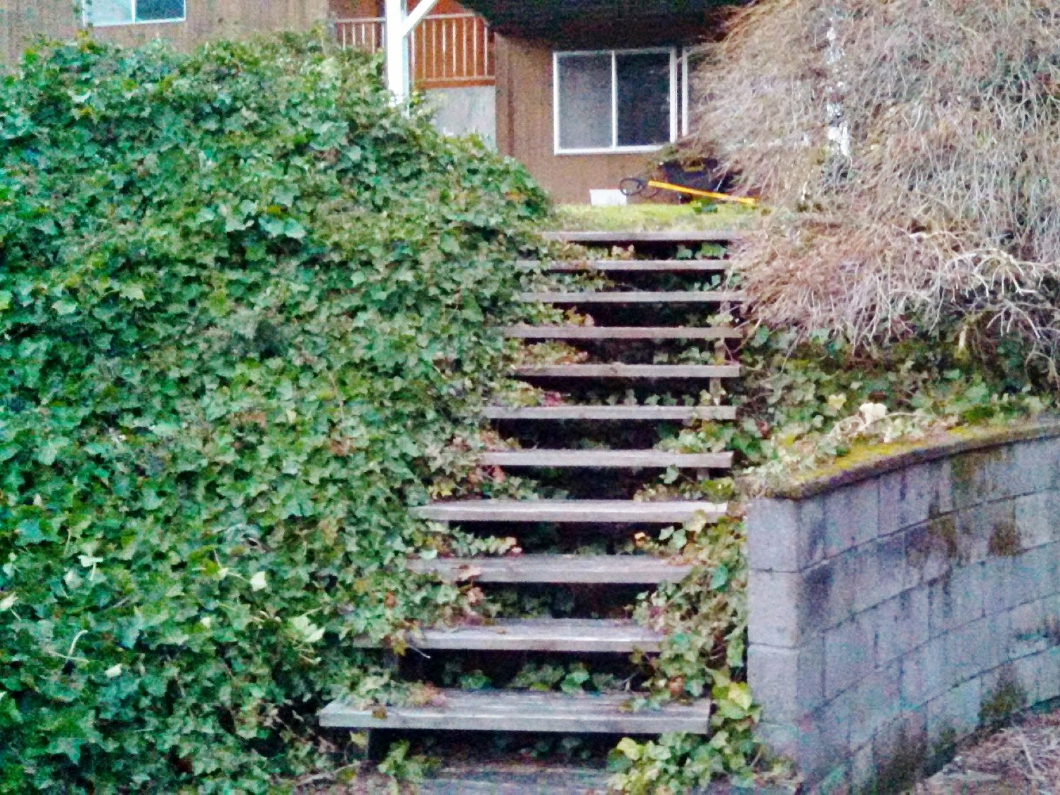 How to Get Rid of Ivy for Good: Ivy covering stairs