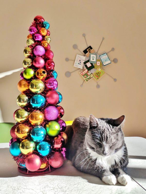 Starburst card wreath on wall behind cat