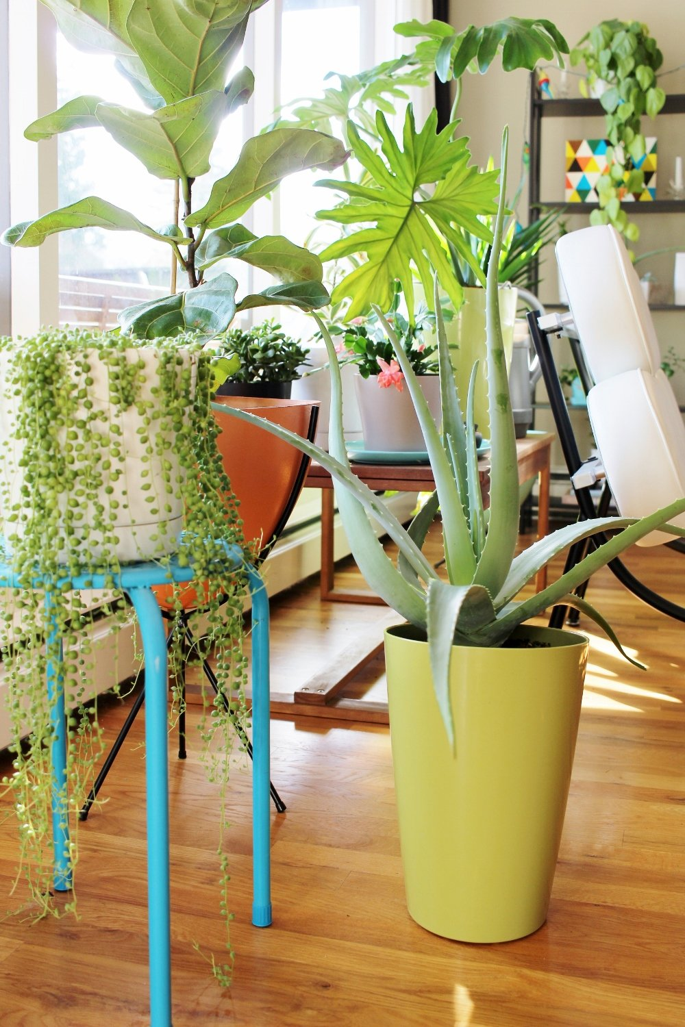 Turquoise plant stand and modern houseplant display