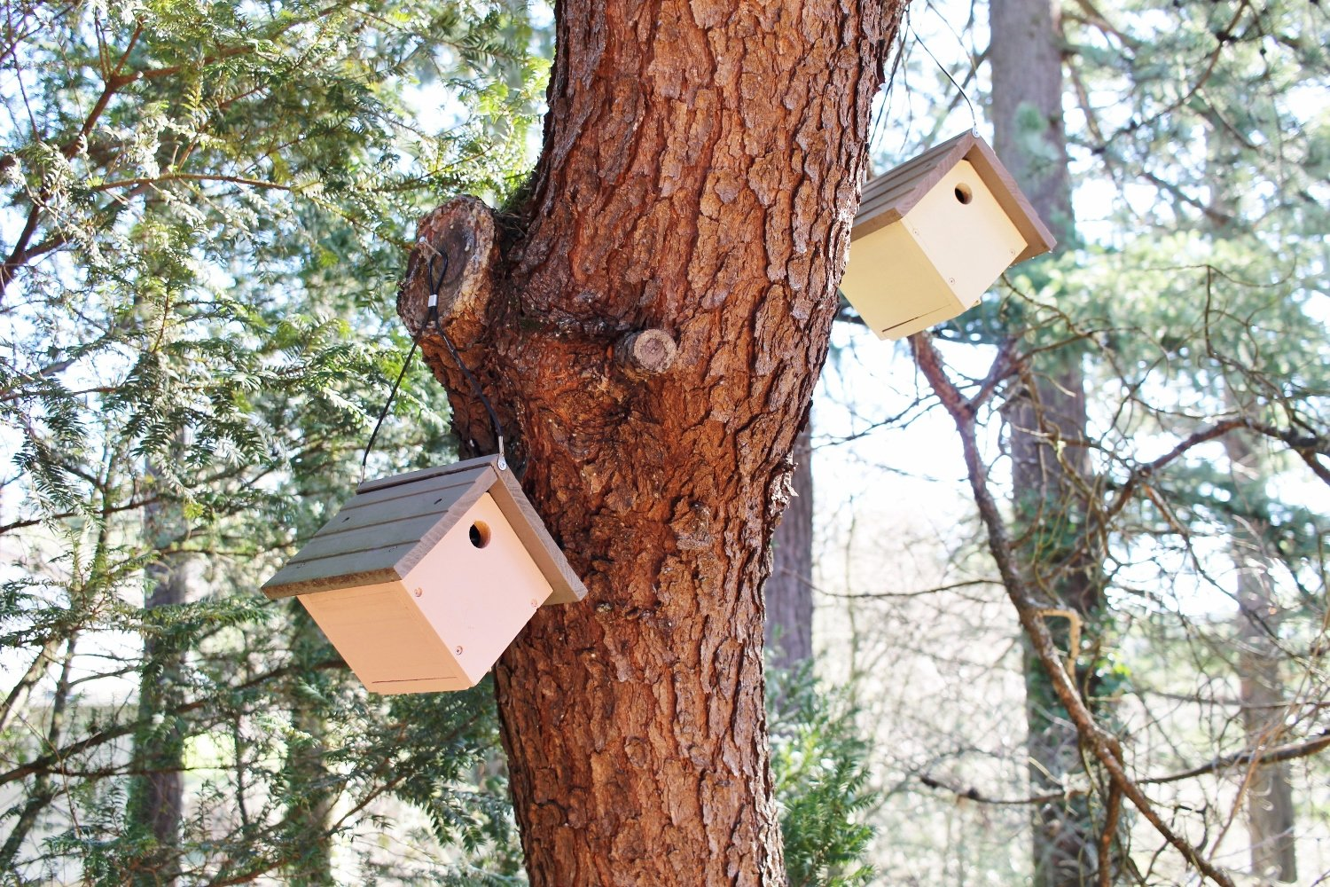 The Whimsical Birdhouse Village Your Yard Needs Right Now