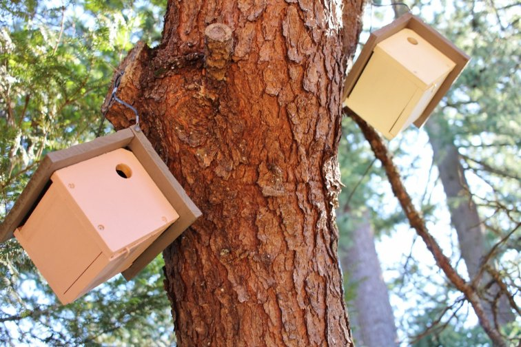Modern chalet birdhouses painted Flushed Cheeks pink and Bee's Knees yellow