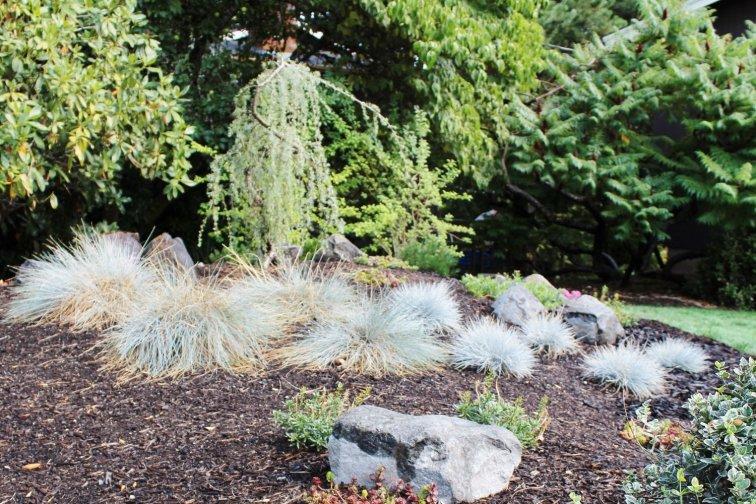 Low-maintenance, drought tolerant plants on a modern landscaping berm