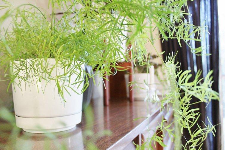 Simple white modern planters