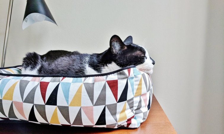 Mid-century modern cat bed with happy cat