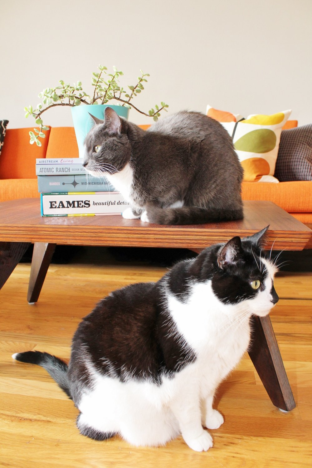 Midcentury modern living room with cats and coffee table books