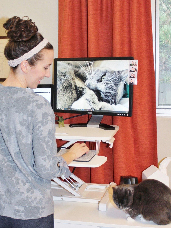 Standing desk converter and cat on desk