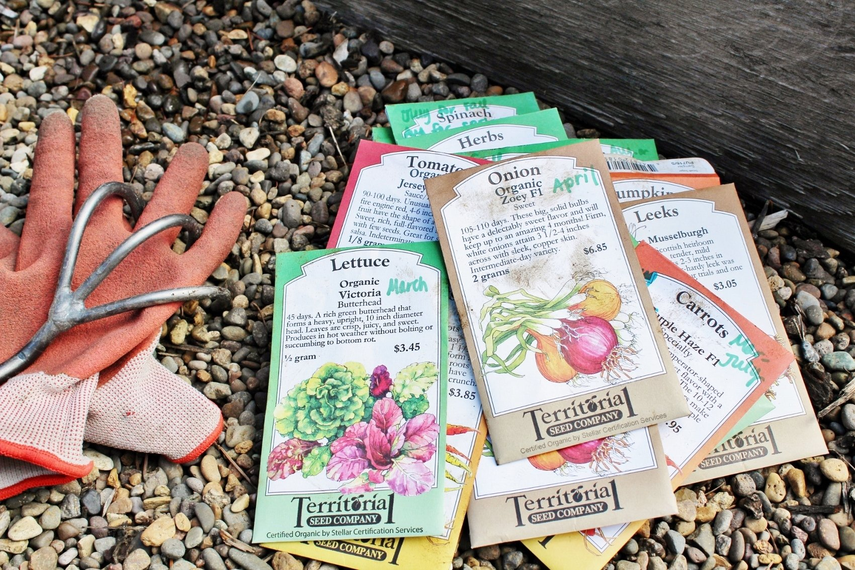 Where to find vegetable seeds for your garden