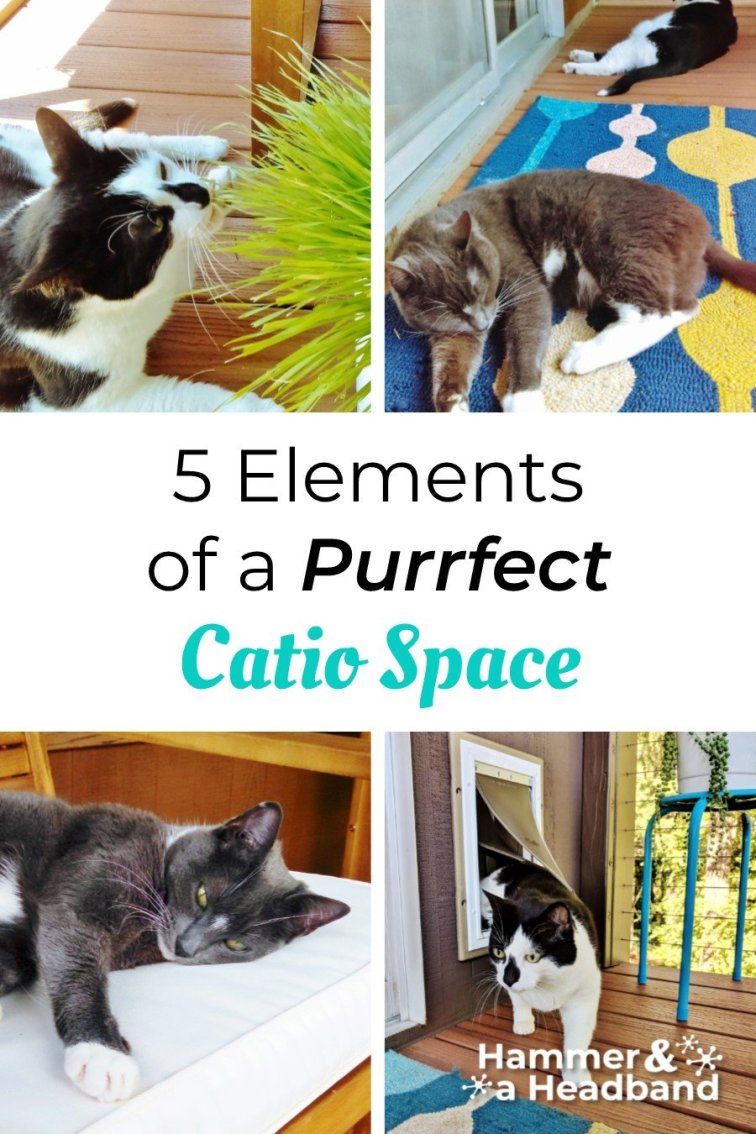 5 elements of a purrfect catio space