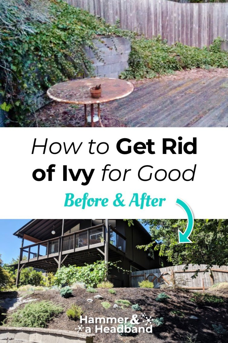 How to get rid of ivy for good - before and after
