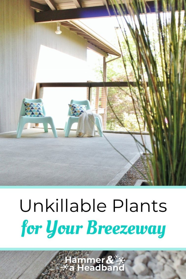 Unkillable plants for your breezeway