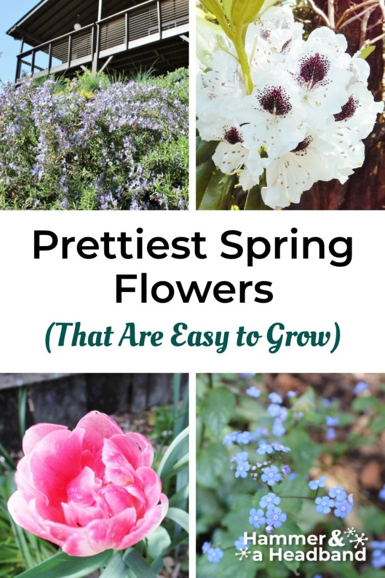 Prettiest spring flowers that are easy to grow