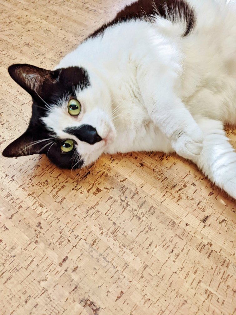 Charlie cat relaxing on the newly installed cork floor