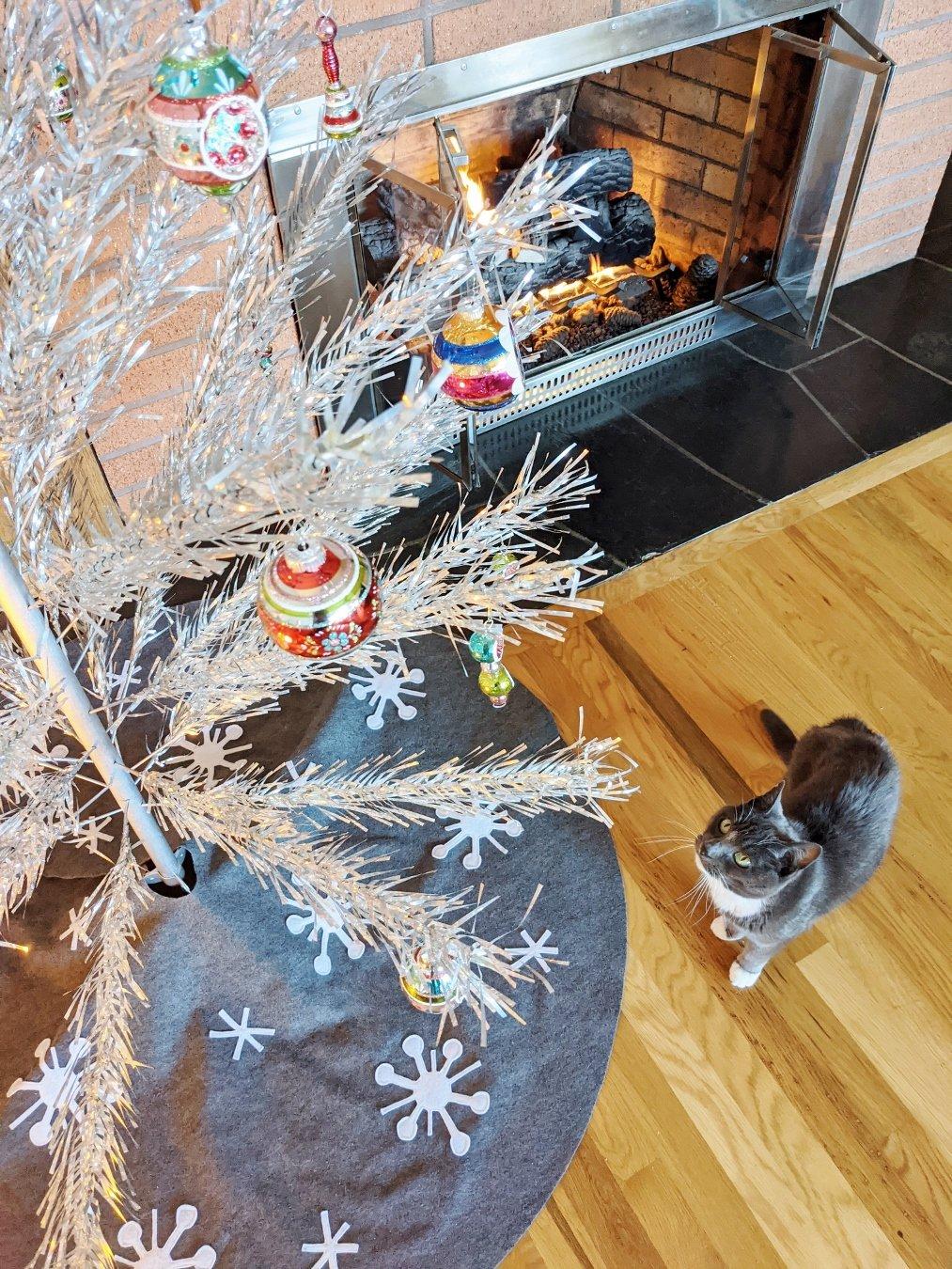 Gray kitty looking at Shiny Brite ornaments on aluminum Christmas tree