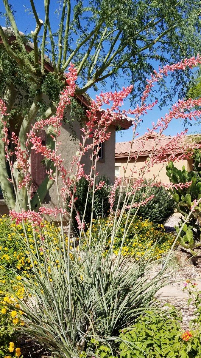 Beautiful desert garden in bloom
