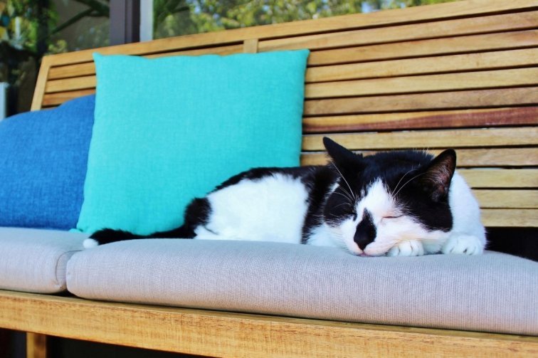 Charlie cat relaxing on the new and improved outdoor loveseat