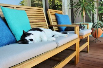 Cats relaxing on wood outdoor furniture restored with teak oil
