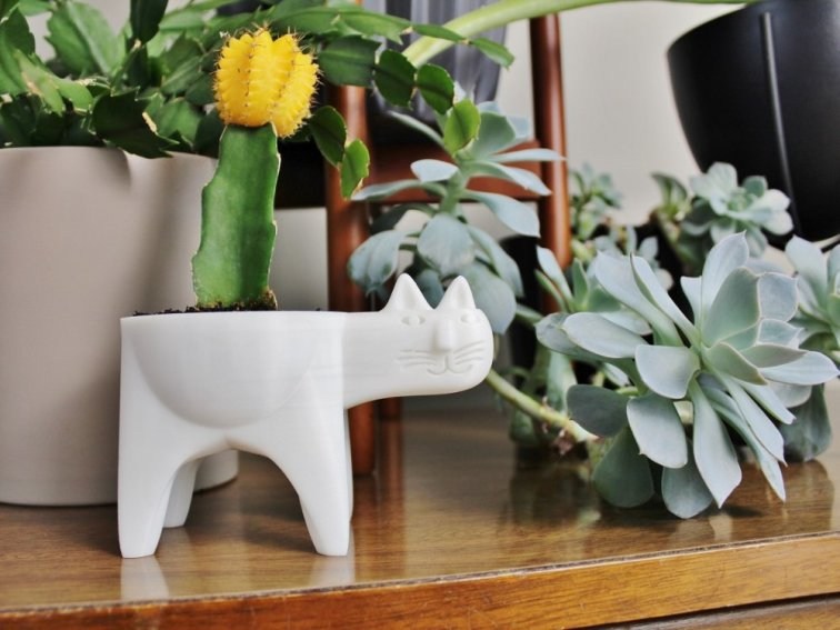 Little cactus with yellow flower in cat planter
