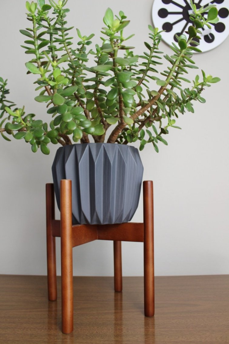 Happy jade plant growing in modern planter and plant stand indoors