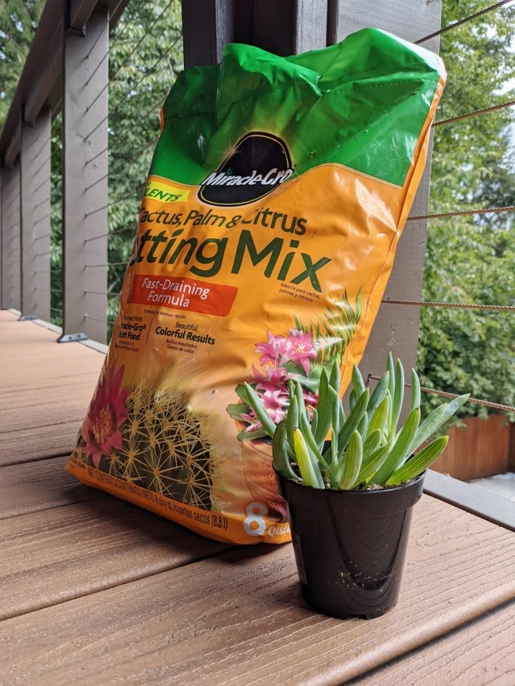 Succulent potting soil mix and succulent ready to be potted
