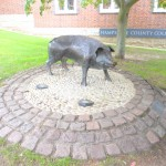 What is a Hampshire Hog?