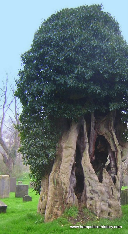 Did a Grampus live in the Yew tree?