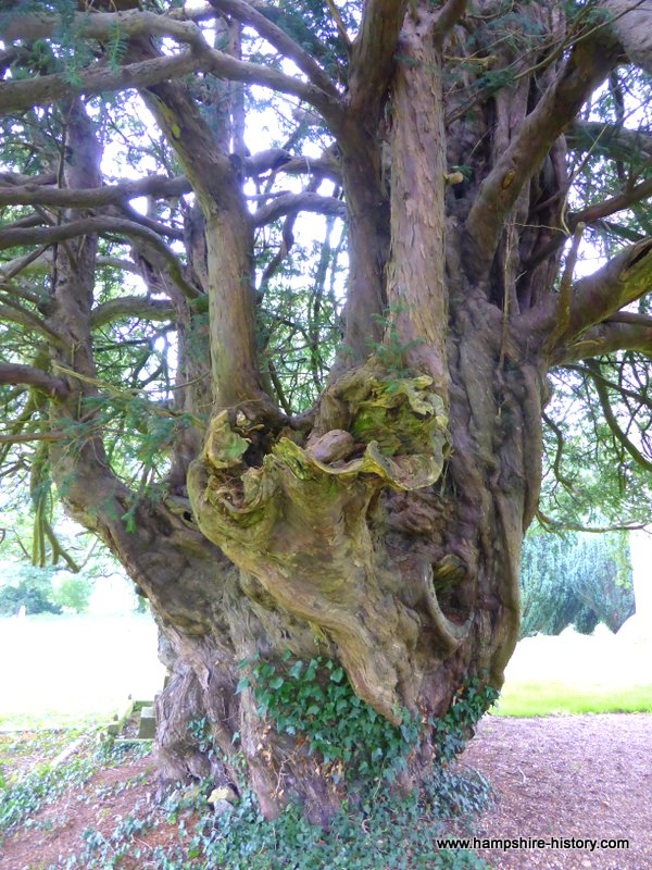 Old Yew Tree Newton Valance