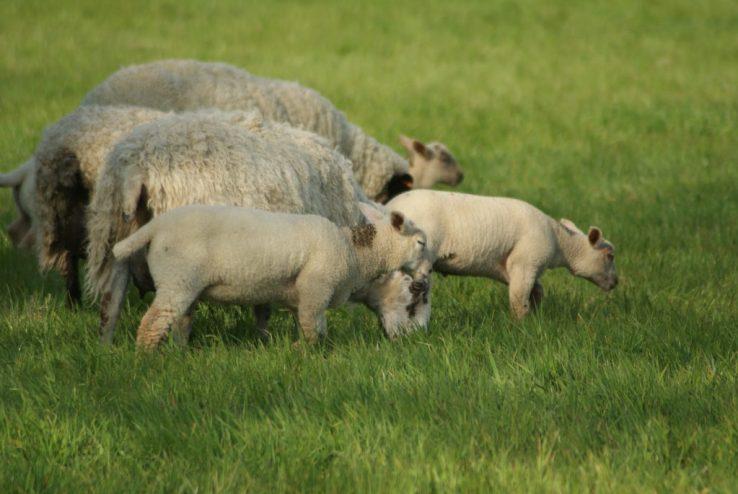 Shepherd Lawes