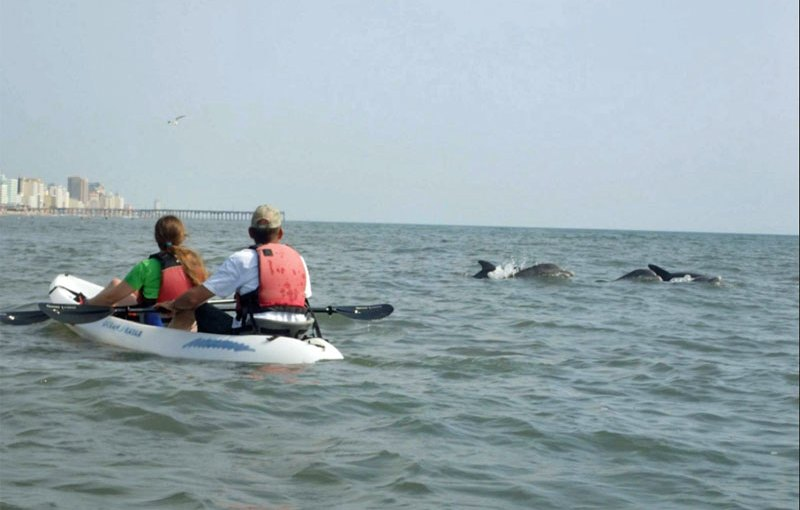 Kayak with Dolphins and Help VegFest — Make Your Reservation Today!
