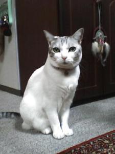 猫のしーちゃん