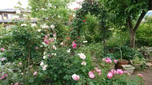 花壇はバラの花盛り