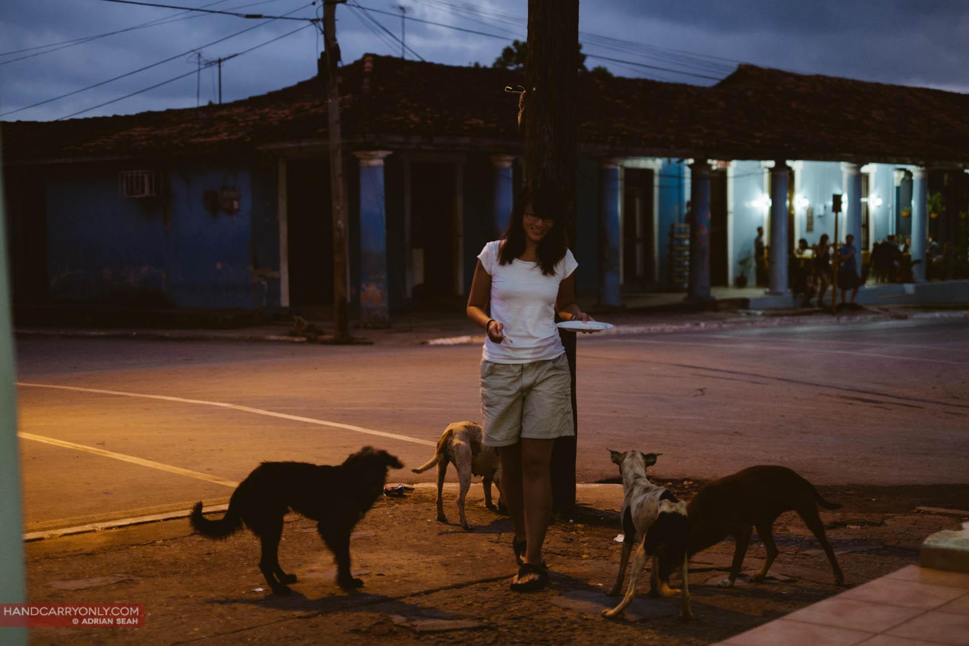 feeding stray dogs in vinales cuba