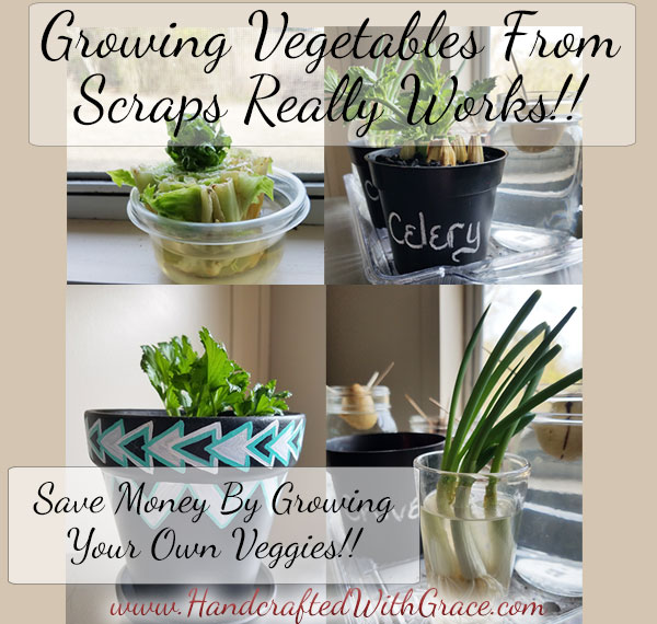 Growing Vegetables From Scraps Really Works. Save money by growing your own veggies.