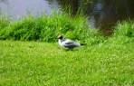 Vogel in Schweden