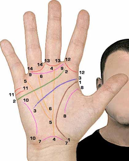 Palmar creases: an overview of the most common hand lines.