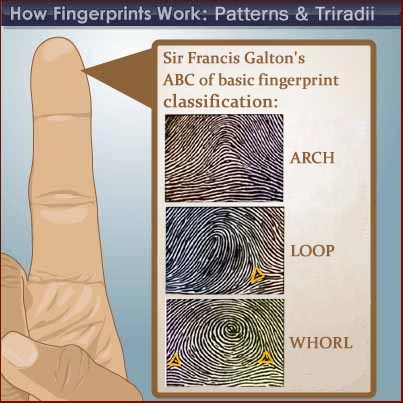 The whorl is known as one of the 3 most common fingerprint patterns.