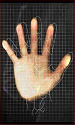 Vein pattern palm reading.