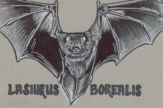 30 - Red Bat