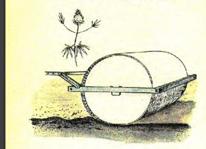 Hanffiebel-Eggen