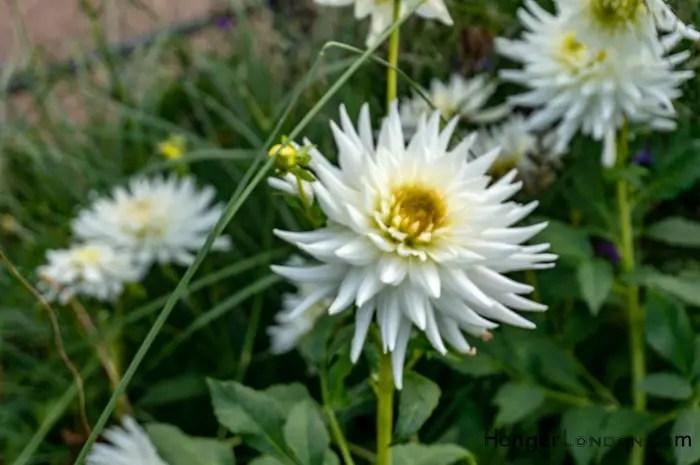 soft blur of Autum flowers Hyde Park