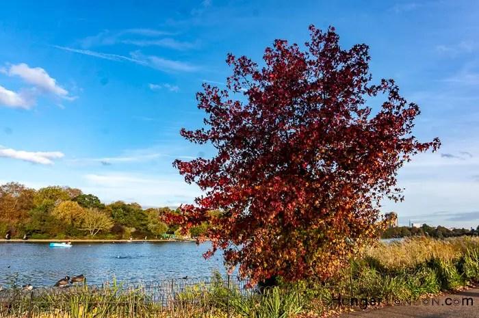 Hyde Park Autumn.